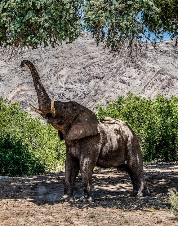 Elefant frisst an einem Baum
