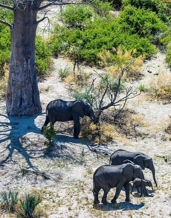 Elefantenherde in der namibischen Steppe